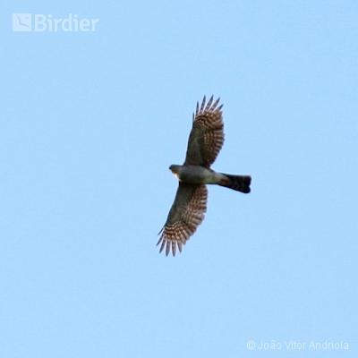 Aves do Planalto das Araucárias
