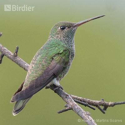 Aves da região dos lagos RJ