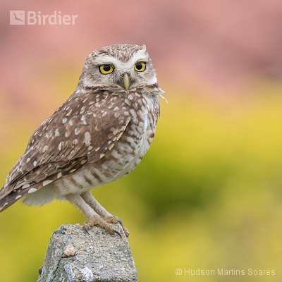 Aves de Peruíbe SP