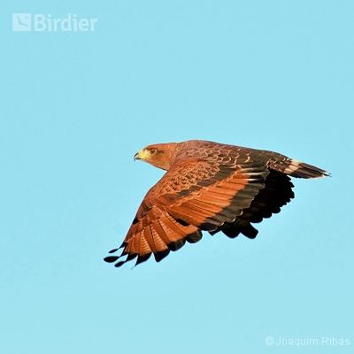 aves de Bonito MS