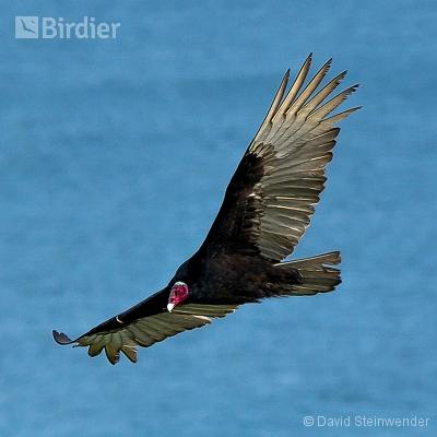 Aves da Costa do Sol