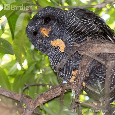 Aves de Valença RJ