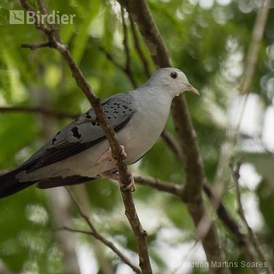 Aves de Salesópolis SP