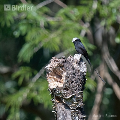 Aves de Parati RJ