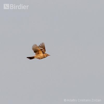 Minhas aves em voo