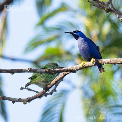 Rio Azul Echo Jungle - Pará