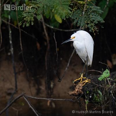 Aves de Resende RJ