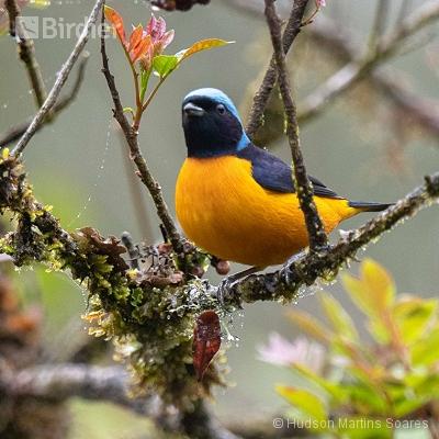 Aves do Parque Estadual  Intervales