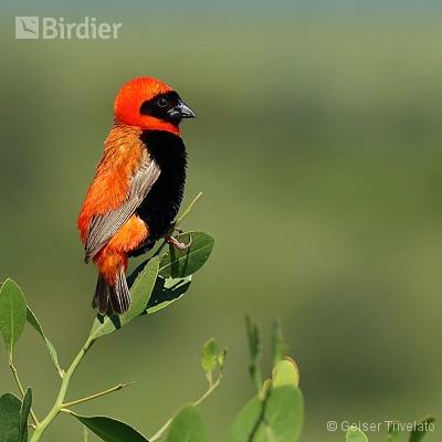 África do Sul - Parque Nacional Kruger