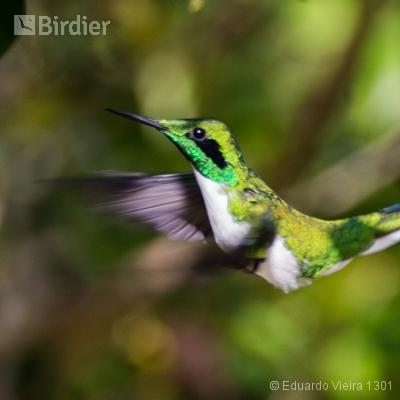 Aves Pernambucanas