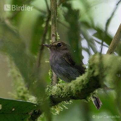 Sítio Virtuoso Birdwatching