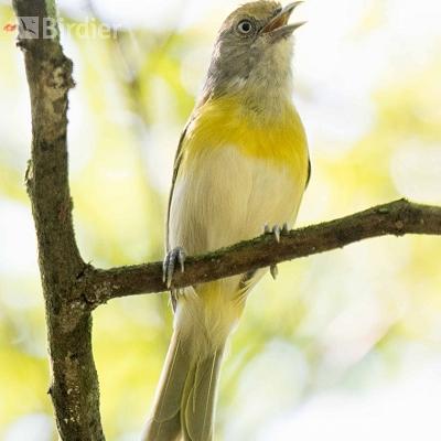 Aves de Volta Redonda RJ