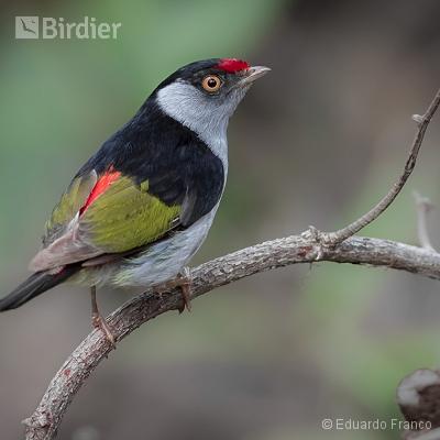 Birds of Serra do Espinhaço
