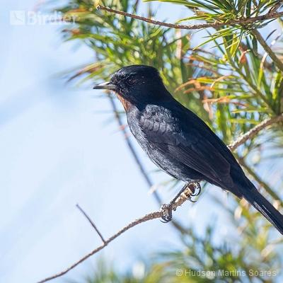 Aves de São José do Barreiro SP