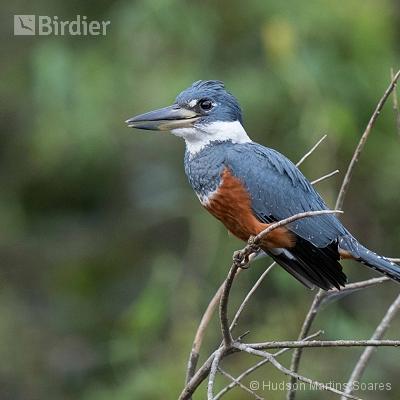 Aves de Barra do Bugres MT
