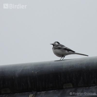 Aves da França