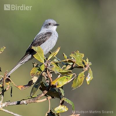 Aves de Itatiaia RJ