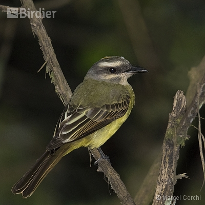 Aves Peru