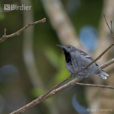 Birding Tour Cabrucas
