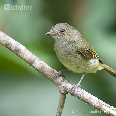 Aves de Bocaina de Minas MG