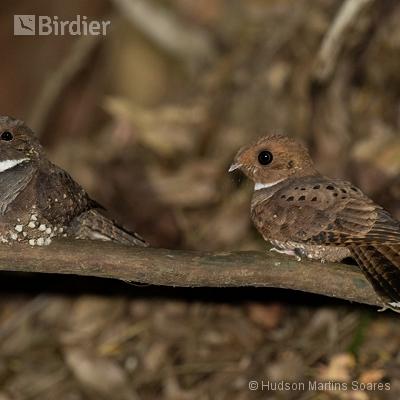 Aves de Queluz SP