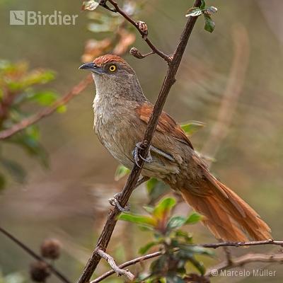 Stickhouse Birds