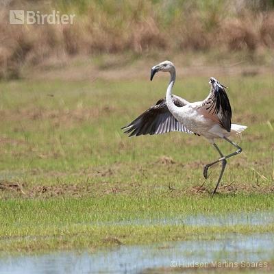 Aves de Guaratinguetá SP