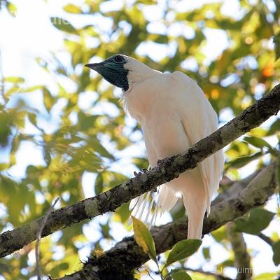 aves de União da Vitória PR