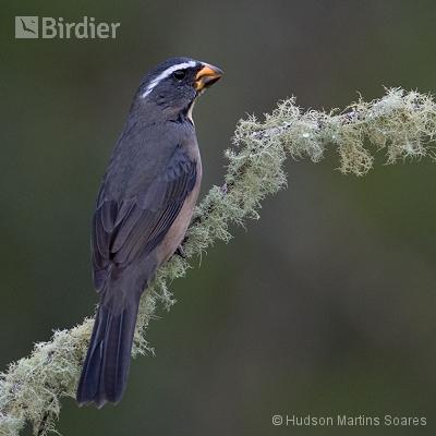 Aves de Urupema SP