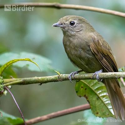 Aves de Itamonte MG