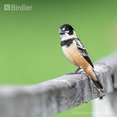 Aves de Poconé MT