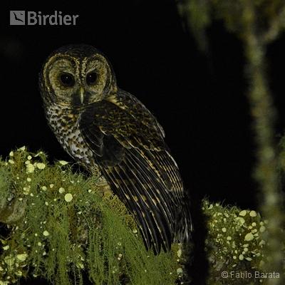 Expedições Birdier pelo Brasil.