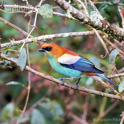 aves de Porto União SC