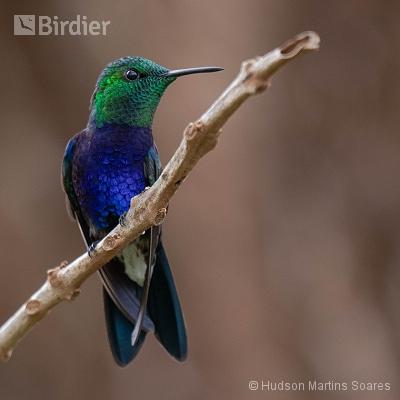 Aves de Brasília DF