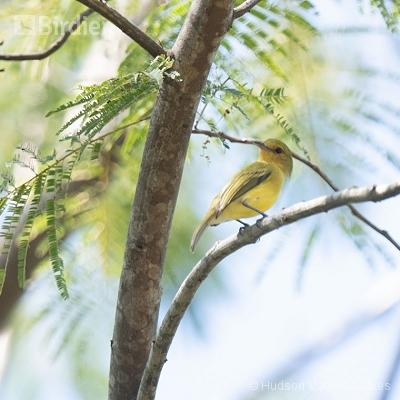 Aves de angra dos Reis RJ