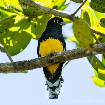 Aves da Bahia