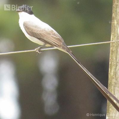 Aves da Fazenda Coqueiros