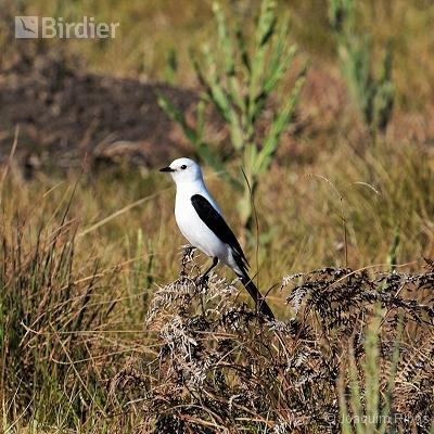 aves de Palmas PR