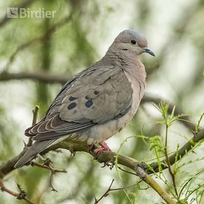 Aves da Argentina